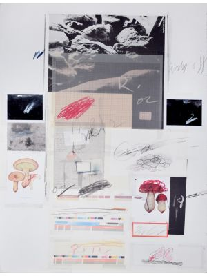 Natural History, Part 1, Mushrooms N. X by Cy Twombly - Contemporary Artwork